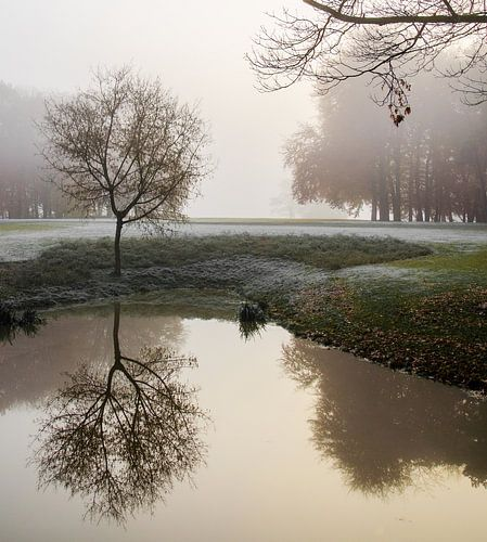 Reflection in the mist