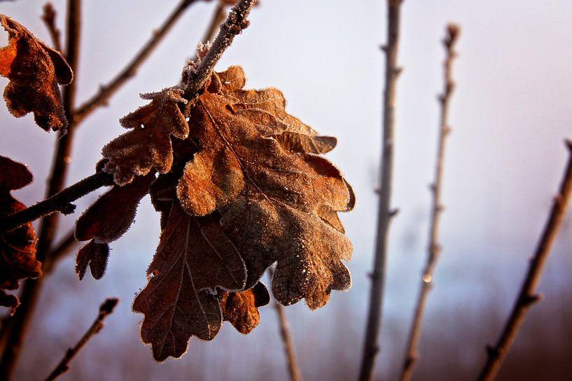 wintertijd van Marianne Bras