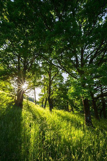 Morning Forest van Thomas Froemmel