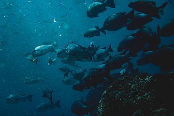 Fisch Indonesien von Marco Vet