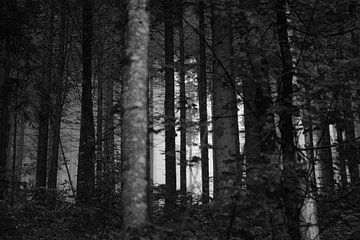 Forrest in the Mist #4 von Floris Kok