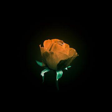 Die letzte Rose im Dezember von Ribbi The Artist