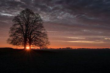 Kleurige zonsopkomst bij boom alone van Moetwil en van Dijk - Fotografie