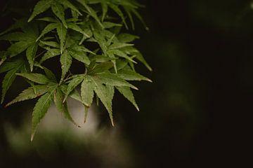 Frische grüne Blätter von Julie Roothooft