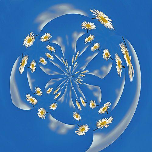 Dazzling Daisies van Caroline Lichthart