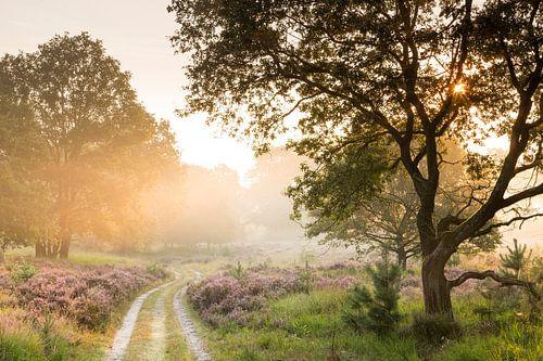 Weg über das Moor von Bob Luijks