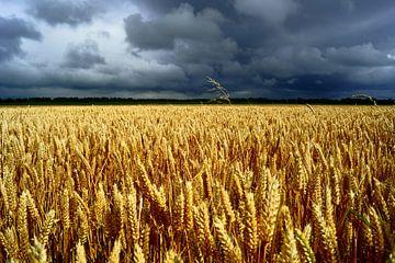Graanveld en grijze lucht van Michel van Kooten