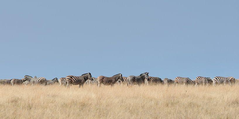 zebra stripes van Aline van Weert