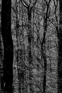 Wald im Vorfrühling van Thomas Jäger