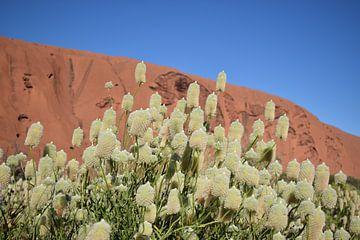 Witte Bloemen Ayers Rock  van Britt Lamers