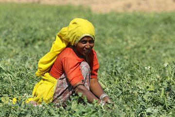 Vrouw werkt op het land van Cora Unk