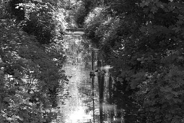 Eenden in een stroompje von Marcel Boelens