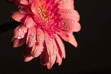 pink flower van Kaatje Fotografie