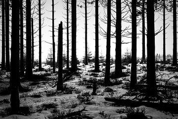 Spooky wood von Ruud de Soet