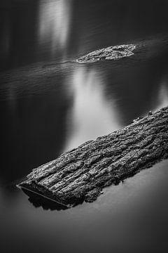 Waterbomen van Mike Peek