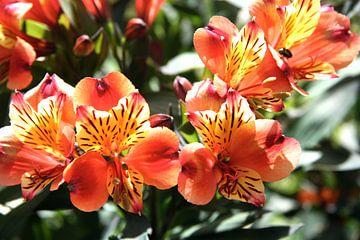 Bloemen von Nicky van Hunnik