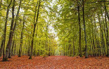 Herfst op Texel / Autumn on Texel van