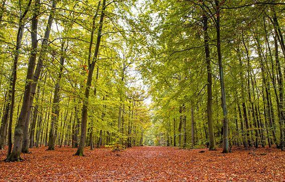 Herfst op Texel / Autumn on Texel van Justin Sinner Pictures ( Fotograaf op Texel)