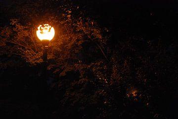 light in the park van Thomas Goeminne