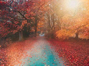 rode bomen van Joey Hohage