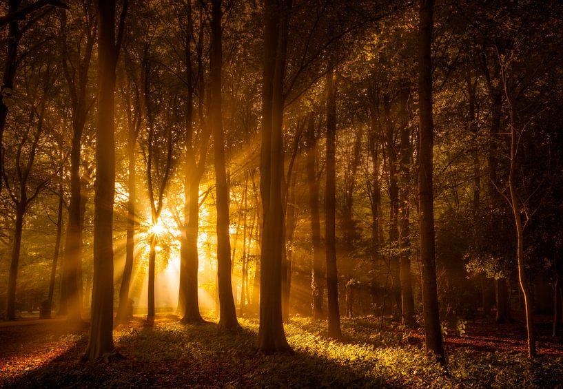 Zonnestralen in Herfstbos van Martijn van der Nat