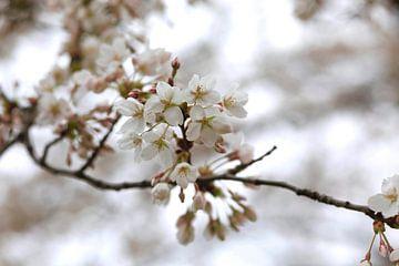 Frühjahr von Thomas Jäger