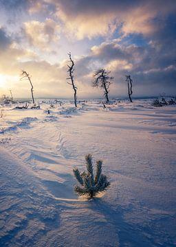 Ochtendlicht bij de Hoge Venen met sneeuw