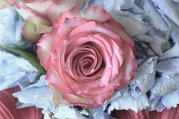 Rose von Anette Jäger