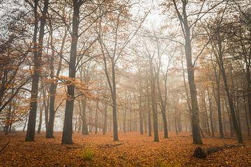 Herfst ochtend von Jeffrey Van Zandbeek