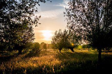 Zonsondergang in het Goudse Hout // Groene Hart, Nederland van PHOTORIK
