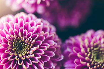 paarse bloemen van Kristof Ven