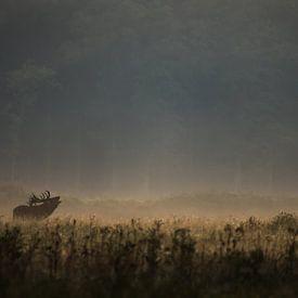 Edelhert bij ochtendgloren van Peter Lambrichs