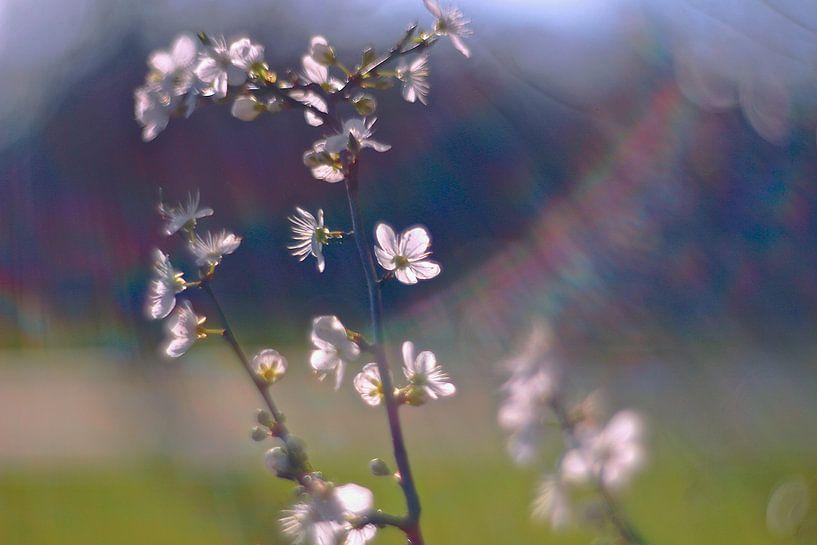 Lentebloemen in de zon van Marianna Pobedimova