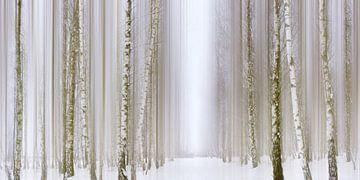 Birkenwald  van