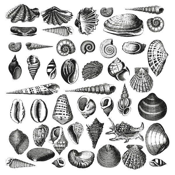 Muscheln von Andrea Haase