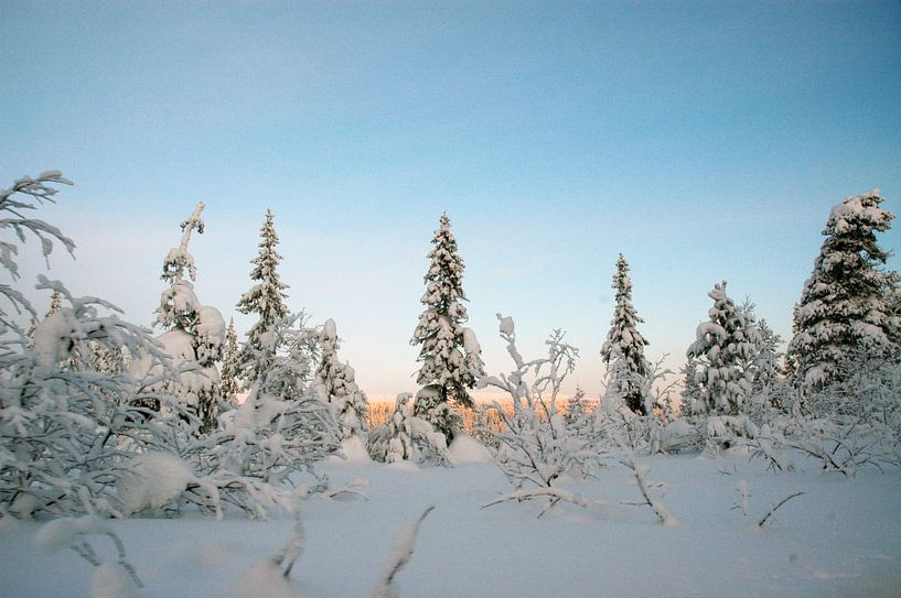 Winter wonderland in Zweden van Barbara Koppe