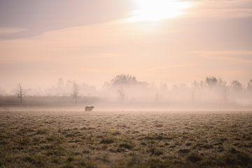 Schafe auf der nebligen Wiese von Tania Perneel