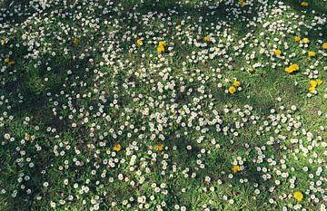 Blumenwiese von BVpix