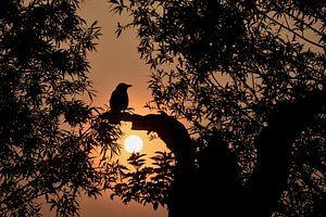 Vogel bij Zonsopkomst van