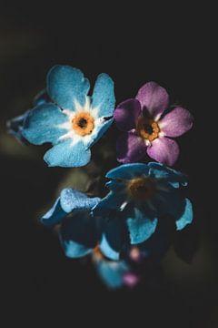 Blaue und rosa Blumen von Isa V