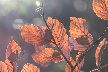 sonniger Herbst von Tania Perneel