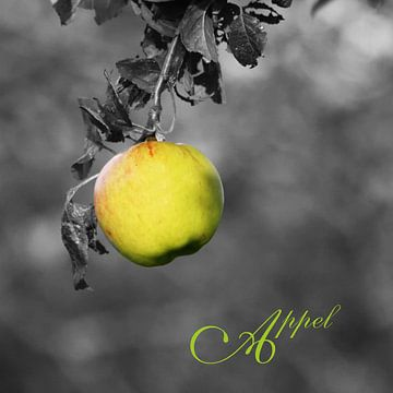 appel van Yvonne Blokland