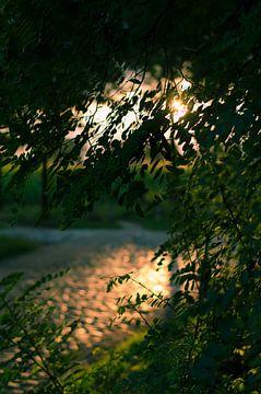 Avondzon door de bladeren van Tom Keysers