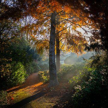 Wandelpad langs Berk met herfstbladeren van Noud de Greef