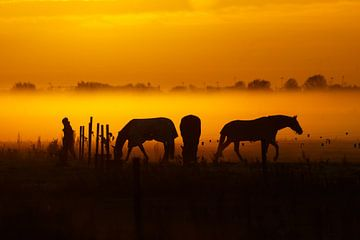 Three horses and a Lady