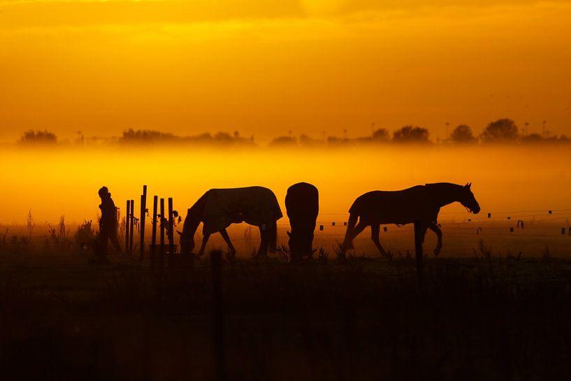 Three horses and a Lady van Pim Leijen