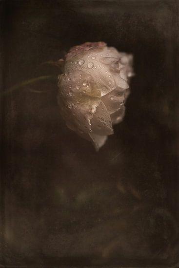 Leigh van Marina de Wit