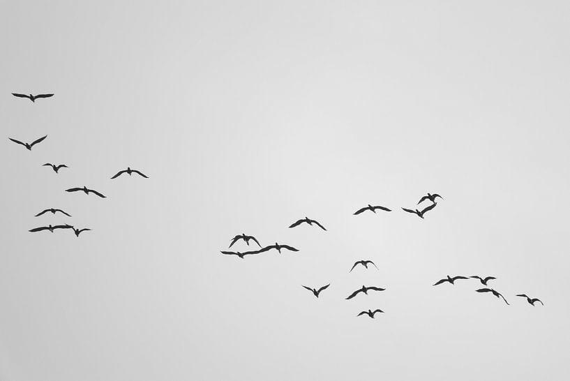 A Flock of Cormorants van Jörg Hausmann