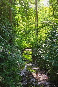Tief im Wald von Anouschka Hendriks