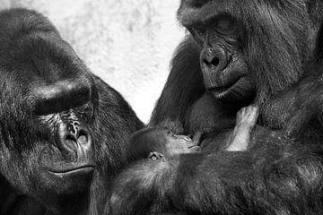 Baby gorilla sur Luuk van der Lee